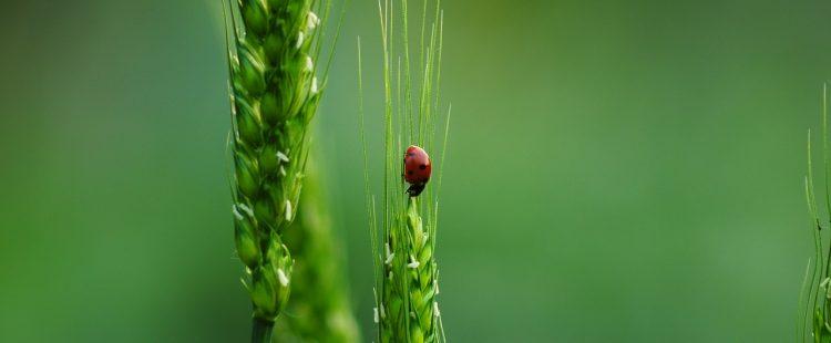 ladybugs-3649920_1280
